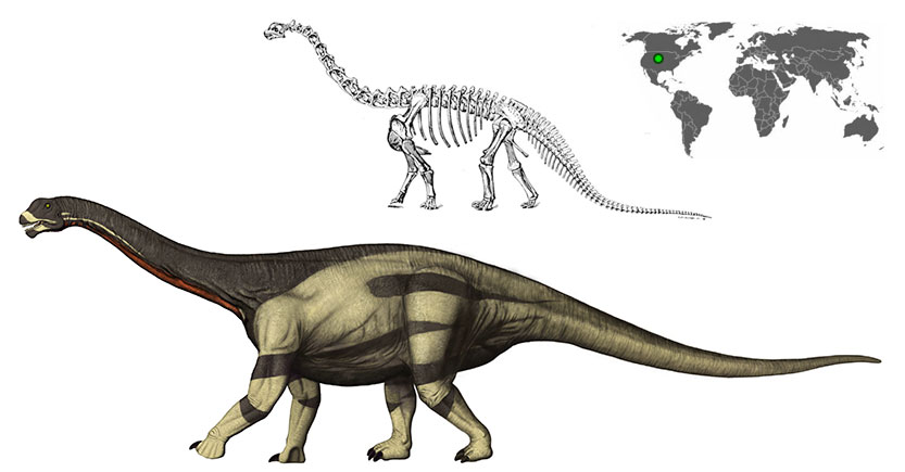 Camarasaurus supremus