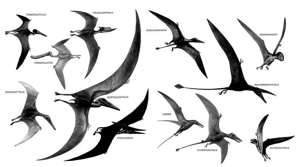 Nombres dinosaurios voladores