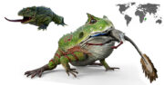 beelzebufo la rana prehistorica gigante