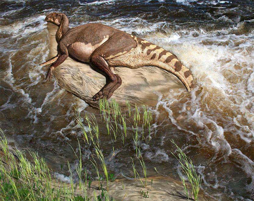 brachylophosaurus atrapado en un banco de tierra