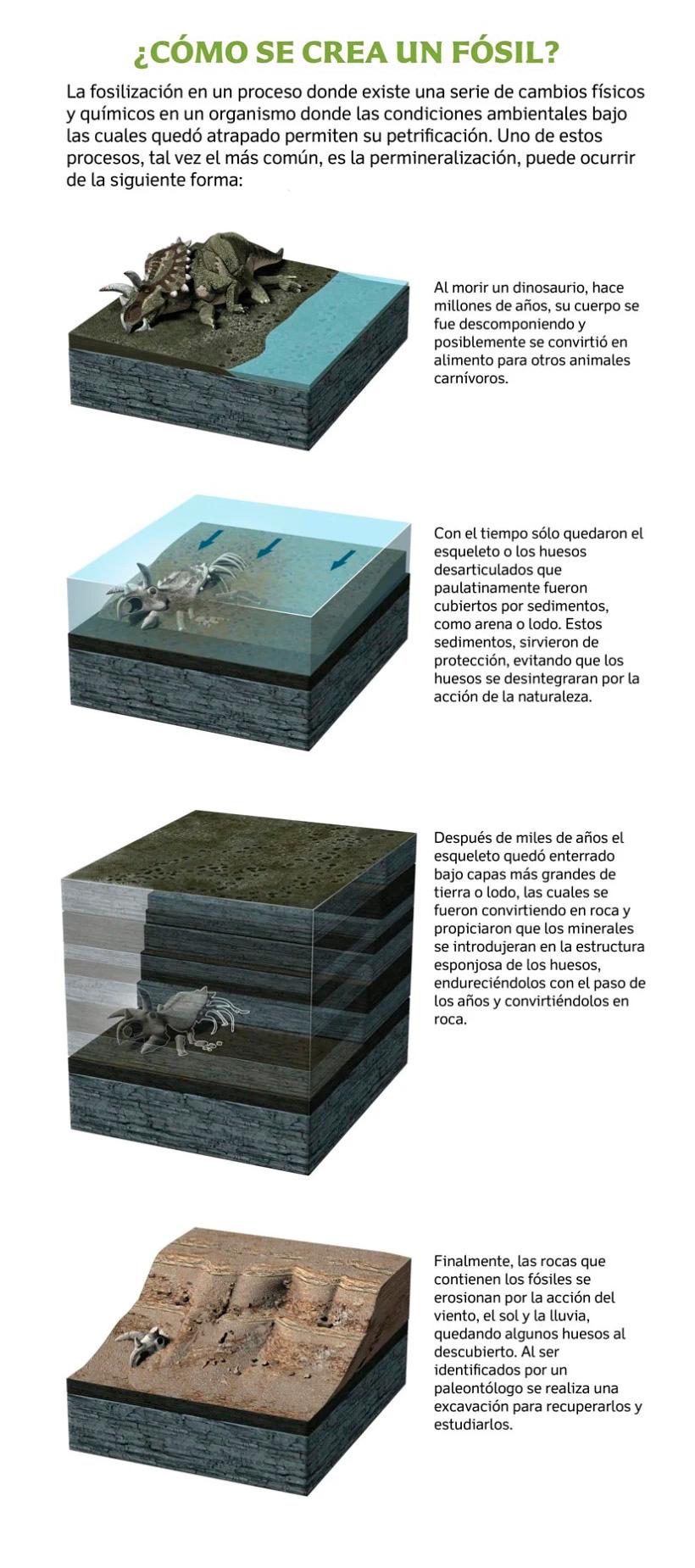 Cómo se forma los fósiles de los dinosaurios