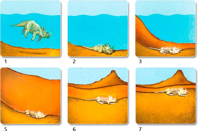 como se forman los fosiles de los dinosaurios