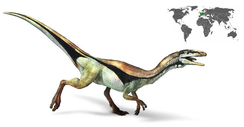 compsognathus longipes