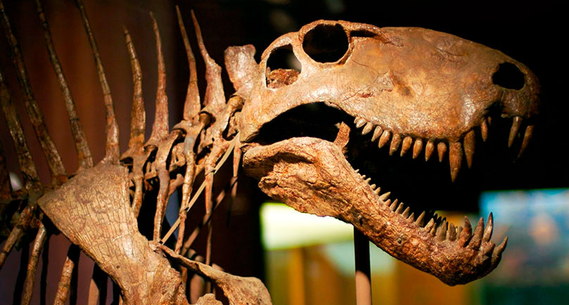 Cráneo de dimetrodon