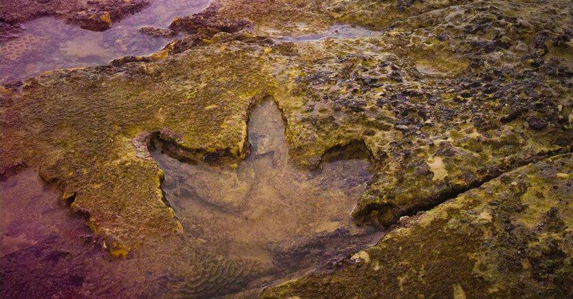 descubren en australia el conjunto de huellas de dinosaurio mas diverso del mundo