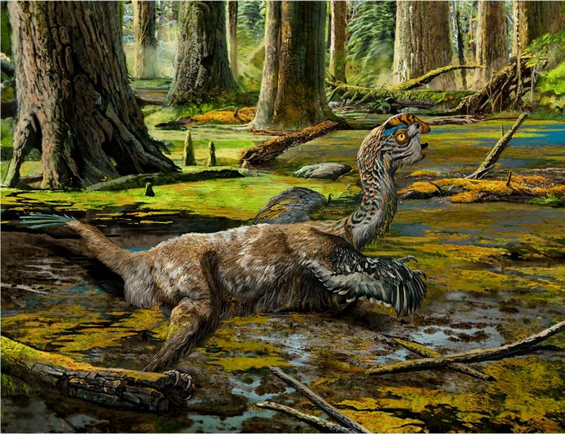 dinosaurio gobiraptor minutus