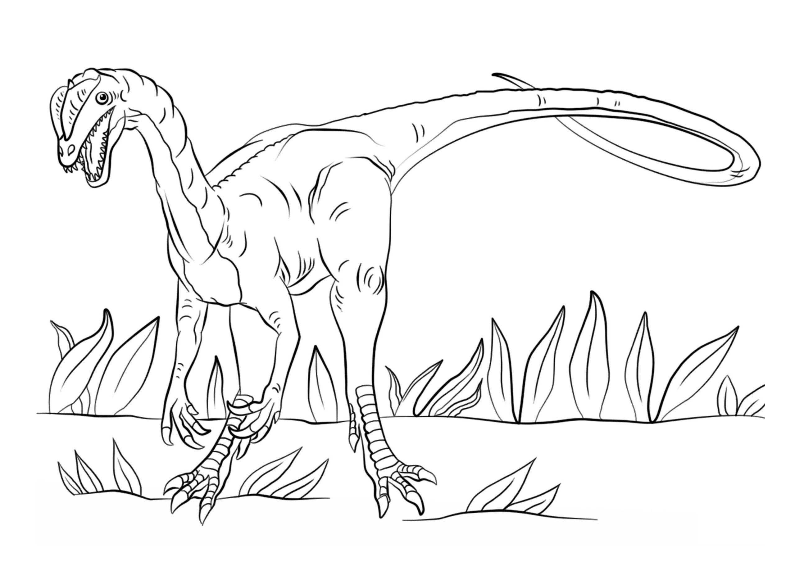 dinosaurios para colorear 6