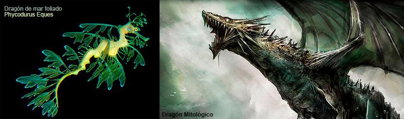 Dragón de mar foliado (phycodurus eques) y dragón mitológico