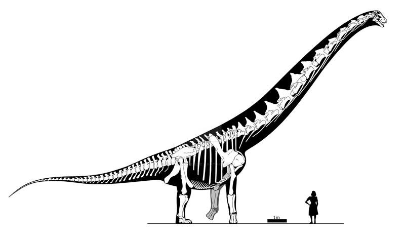 dreadnoughtus schrani el dinosaurio mas grande