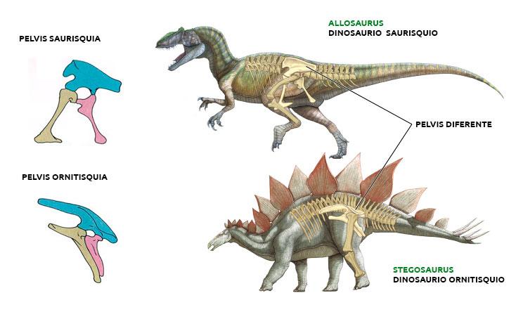 Ejemplos de dinosaurios Ornitisquios y Saurisquios