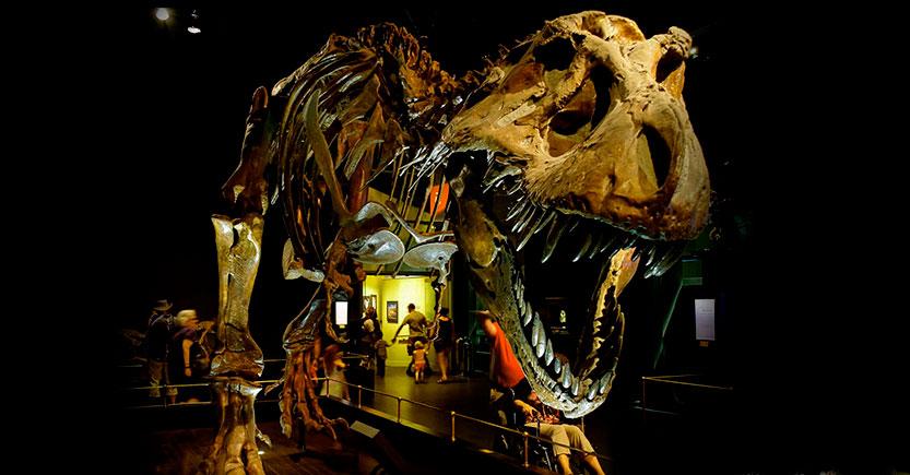 el joven tiranosaurio de hell creek museo burpee de historia natural