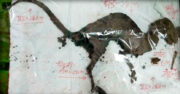 encuentran en india el esqueleto de un supuesto dinosaurio con carne aun en los huesos