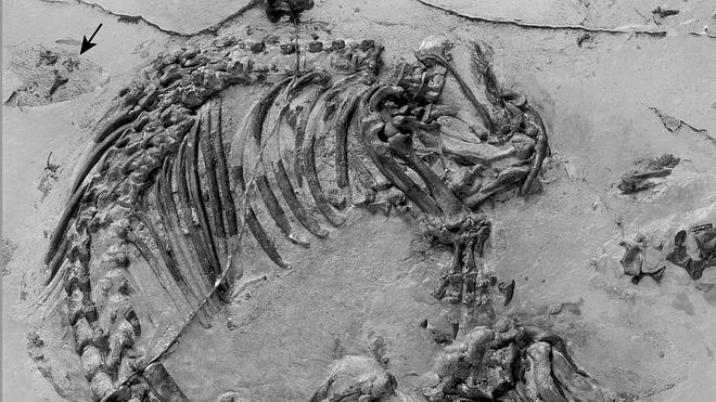 fosil en el yacimiento de las hoyas cuenca