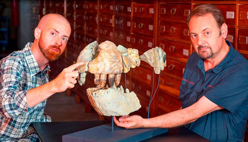Fosil de la dentadura del El Razanandrongobe sakalavae