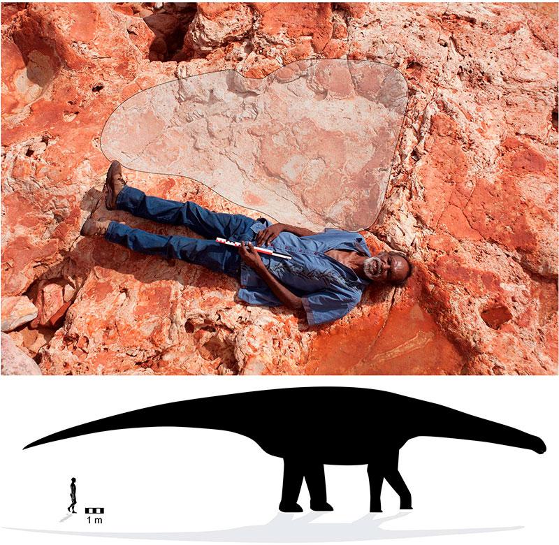 huella de sauropodo gigante