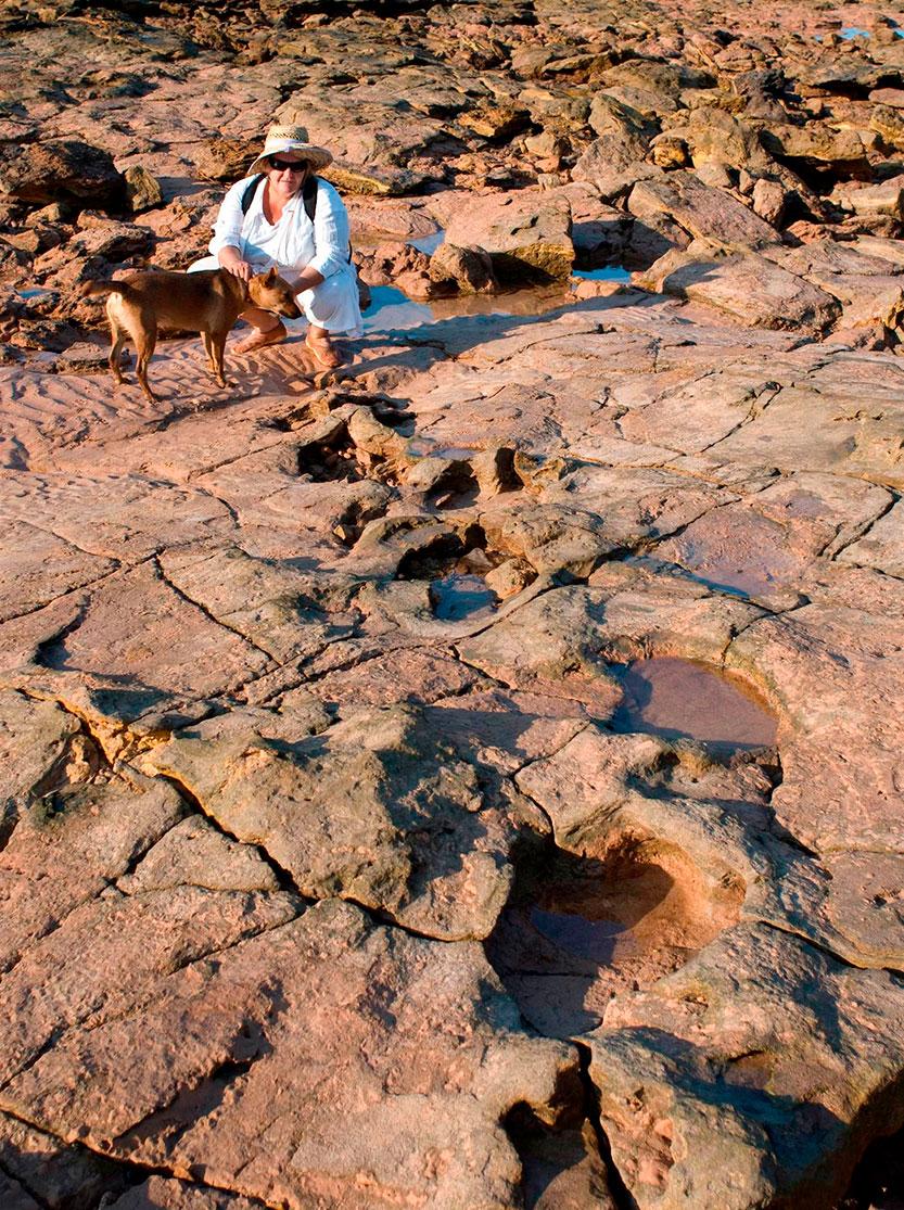huellas de stegosaurus en australia