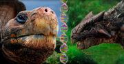 las tortugas evolucionaron de los dinosaurios