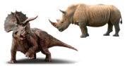 los rinocerontes son dinosaurios