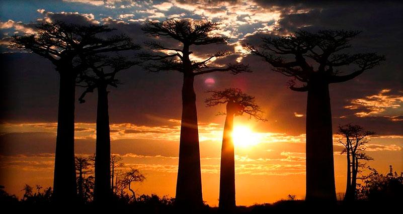 Madagascar la isla de los dinosaurios misteriosos