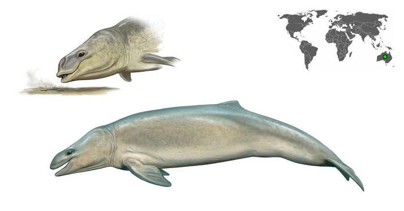 mammalodon