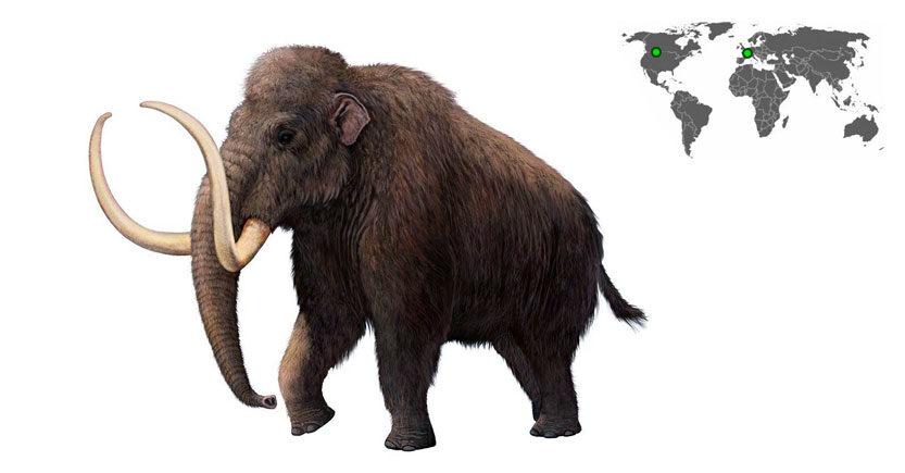 mamut lanudo mammuthus primigenius