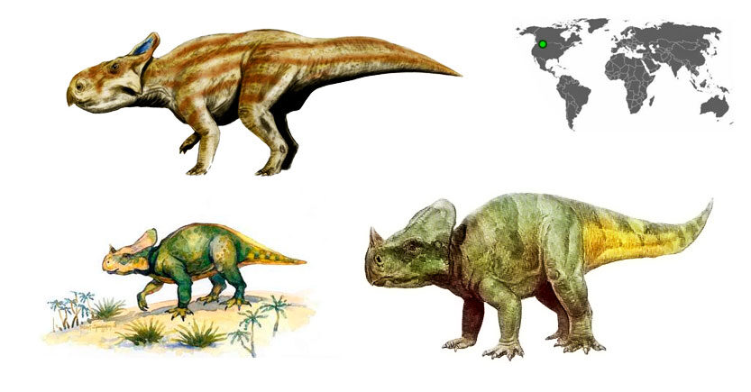 montanoceratops