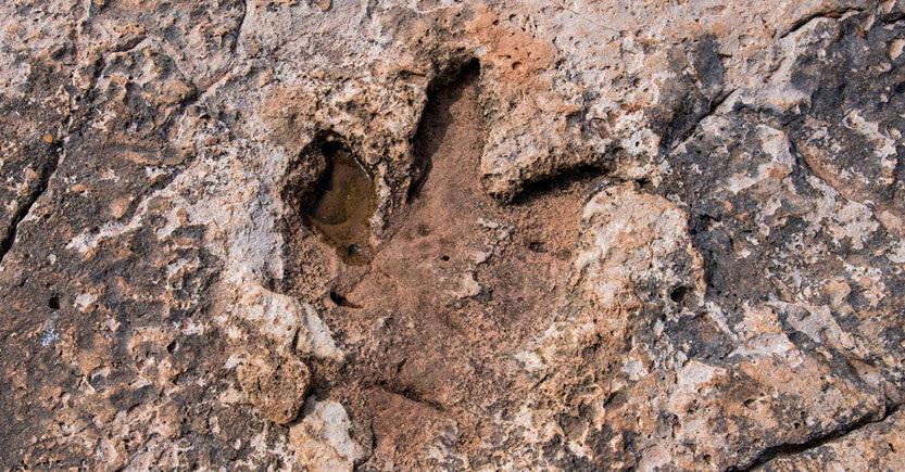 paleontologia aplicada huellas de dinosaurio