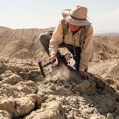 paleobotánica y paleontología