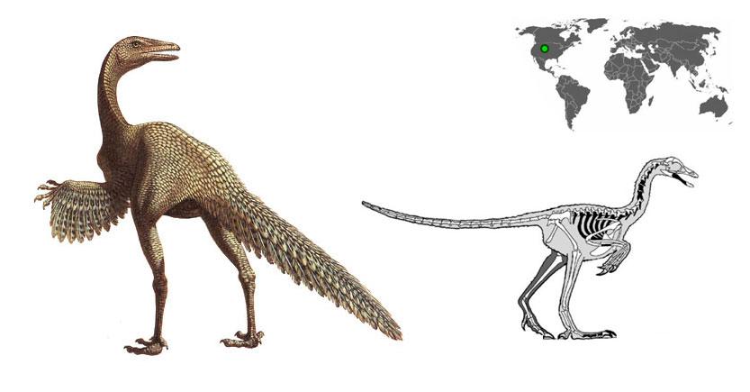 Protoavis es un dinosaurio con aspecto de ave