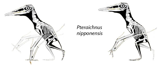 pteraichnus nipponensis