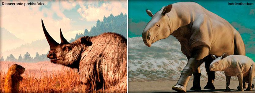 Rinoceronte prehistórico e Indricotherium