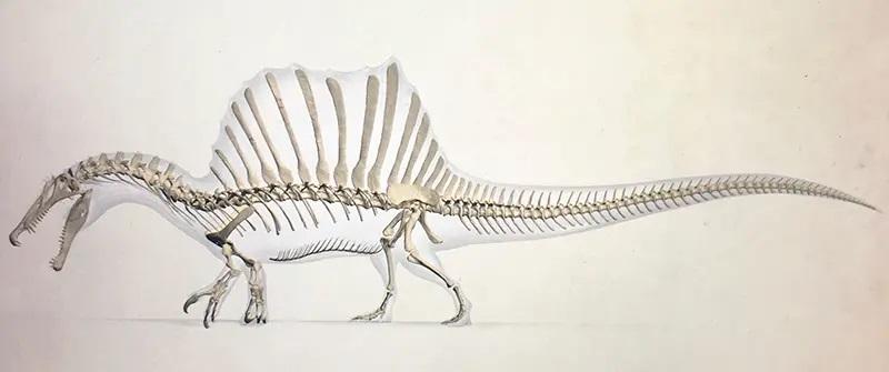 spinosaurus esqueleto