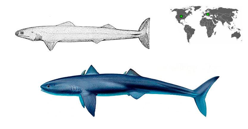 tiburon cladoselache